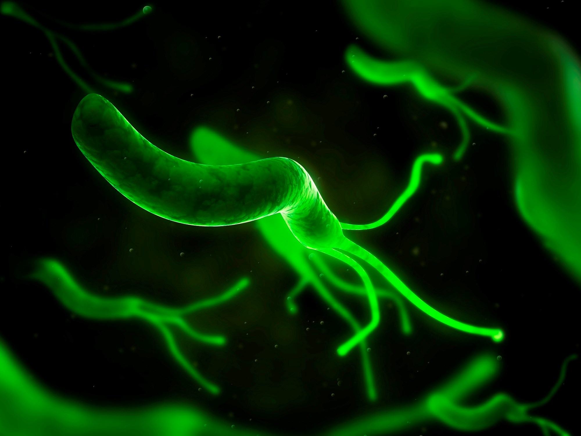 Eliminating H Pylori Infection May Benefit Adults With Immune Thrombocytopenic Purpura